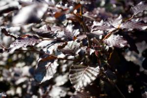 warme herfstkleuren bij winterharde bloeiende struiken welke onderhoudsvriendelijk zijn en goed in een landschapstuin passen
