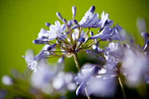 kleurrijke bloemen in een bloemrijke border in een kleine tuin maar tevens een droomtuin in Nieuwegein