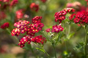 kleurrijke bloeiende planten en struiken dragen bij aan de sfeer in een klassieke tuin met het karakter van een landschapstuin welke ook prima geschikt zijn in een kleine tuin voorzien van een terras voor een zomerse sfeer