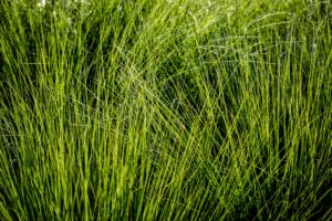 siergras in borders zorgen voor een luchtige sfeer in strakke tuinen zonder veel onderhoud. Siergrassen zijn ook prima geschikt voor zowel zomer als winter de tuin wat karakter te geven zonder dat ze veel onderhoud vragen