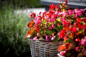 eenjarige bloeiende planten in terraspotten en terrasmanden voor een zomerse sfeer in je tuin. Prima geschikt voor klassieke tuinen, landschapstuinen, kleine tuinen, stadstuinen en kindvriendelijke tuinen. Deze terrasmanden en terraspotten zijn zeer onderhoudsvriendelijke en winterhard, daardoor prima geschikt om bij vijvers te plaatsen om de tuin meer aan te kleden in combinatie met verlichting
