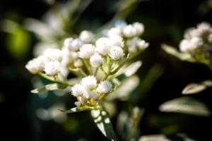 bloeiende vaste struiken die de gehele zomer in bloei staan zodat het tuinonderhoud weinig is maar je wel kunt genieten van een landschapstuin voorzien van rijkelijk bloeiende borders in een exclusieve tuin voorzien van grote borders langs het terras en gazon