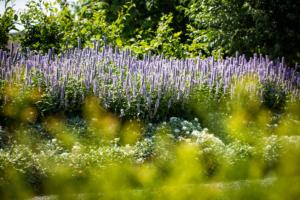 rijk bloeiende borders welke de gehele zomer in bloei staan bij een landschapstuin voorzien van sierbestrating na een tuinontwerp welke noodzakelijk was voor de tuinrenovatie