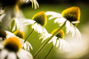 bloemrijke border zie een zomers karakter geven aan een kleine tuin voorzien van bloeiende borders. Een tuinidee wat gerealiseerd is aan de hand van een 3d tuinontwerp en waar tevens mee is gedacht in de sierbestrating om dit tot een geheel te vormen