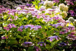 bloemenzee in een bloemrijke border in een landschapstuin welke ook prima bij bedrijven en instellingen toegepast kunnen worden door een goed tuinontwerp te laten maken