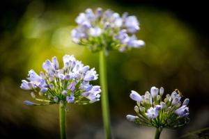 kleurrijke bloemen in een bloemrijke border in een exclusieve tuin met als doel een landschapstuin te vormen