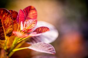 kleurrijke struiken voor een herfstgevoel in een landelijke tuin die ook in de wintermaanden voorzien is van kleurrijke beplanting. Tevens onderhoudsvriendelijk is doordat het tuin onderhoud wordt verzorgt door Hoveniersbedrijf Brand welke de tuin winterklaar maken