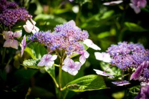 bloemrijke borders geven een landelijk gevoel aan het tuinontwerp voor een droomtuin met een groot gazon en veel bloeiende borders in de plaats Oudewater en Montfoort