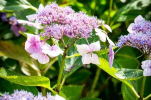 bloemrijke borders geven een landelijk gevoel aan het tuinontwerp voor een droomtuin met een groot gazon en veel bloeiende borders